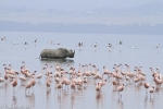 flamingos-and-black-rhino-6467