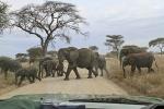 ElephantCrossing