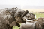 ElephantPlayingWithTrunk