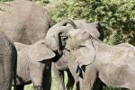 ElephantPlaytime