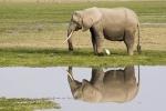 ElephantReflecion