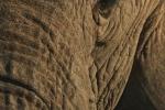 ElephantUpClose