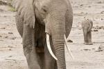 ElephantandBabyinAmboseli