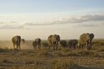 ElephantsCrossingAmboseli