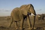 ElephantsCrossingDryLakebed