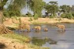 ElephantsCrossingRiverKenya