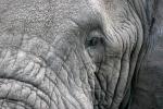ElephantsEye