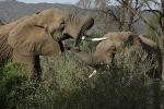 ElephantsMakingUp
