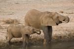 ElephantsatHappyHour