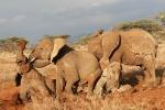 MudRompingElephants