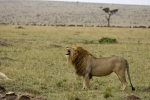 LionFlehming