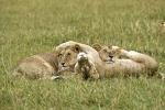 LionFun