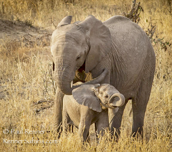 Elephant and Baby-