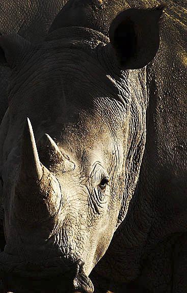 IMG_9533 Rhino