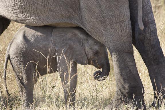 2012 05 African Photo Safari Newsletter Botswana Renner