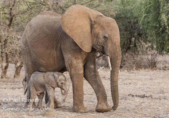 Mother and Newborn Elephant-0043