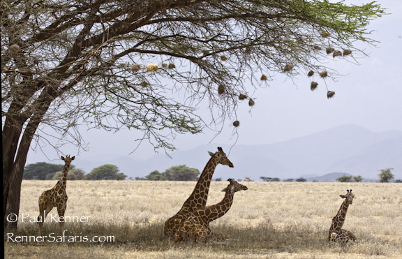 Nap Time in Samburu-4905