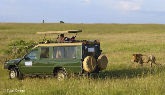 Photographing Lion, Masai Mara,Kenya-