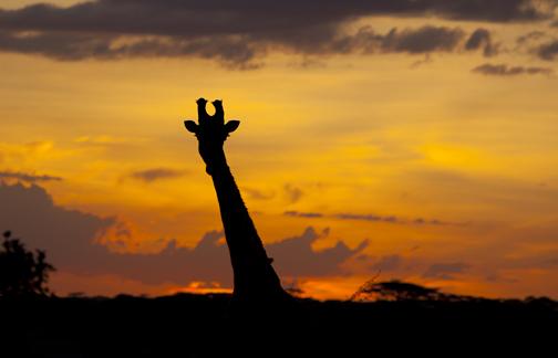 Good Evening Africa