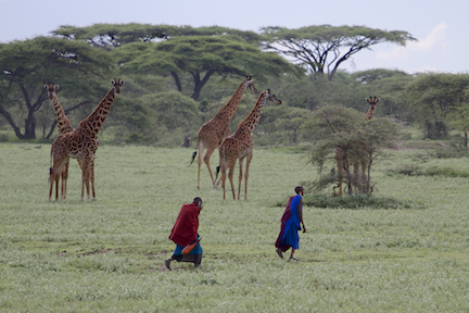 Masai & Giraffes, Ngorongoro Conservation Area, Tanzania