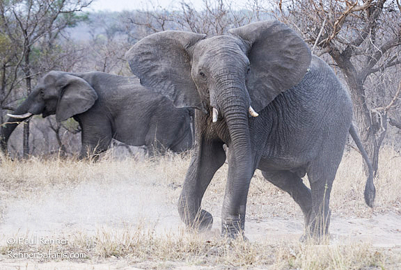 Elephant Warning-2701