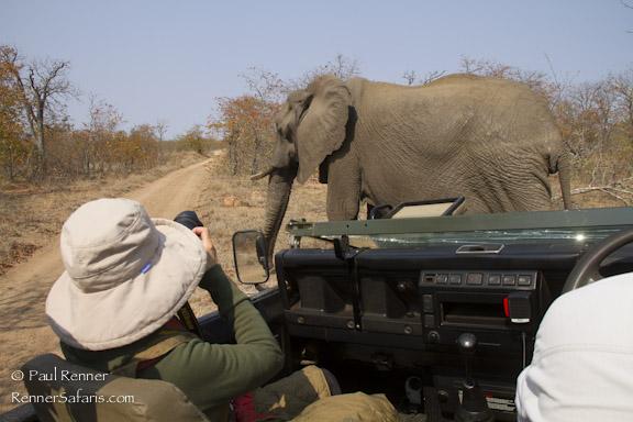 Photographing Elephants-9984