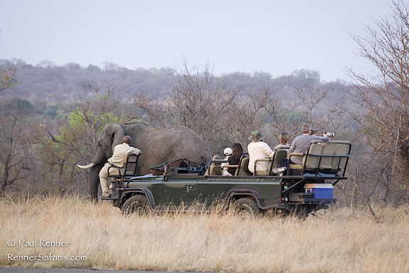 Watching Elephants-2662