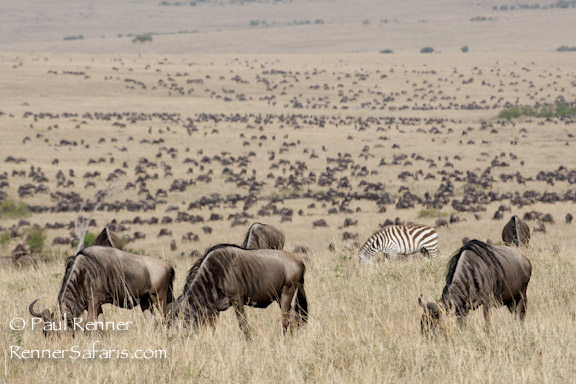 Great Migration-0934