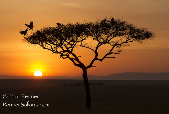 Sunset in the Mara, Kenya-5536