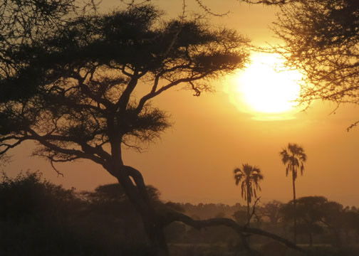 African Sunset-