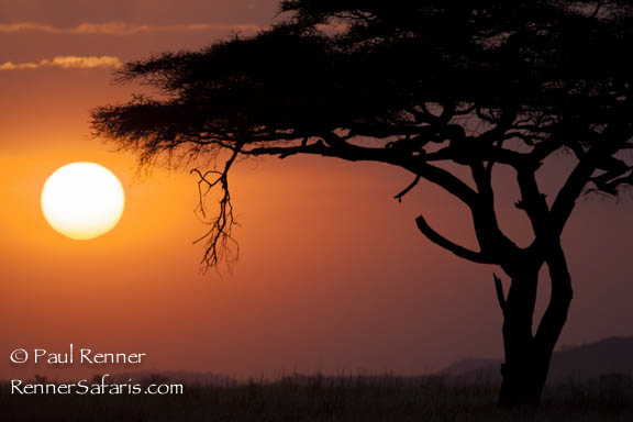 Serengeti Sunset-7856