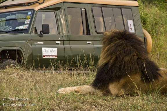 Lion and Our Safari Vehicle-7577