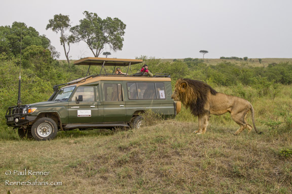 Lion and Our Safari Vehicle-7587