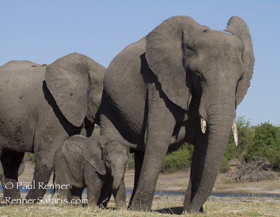 Mom and Baby Elephant-0977