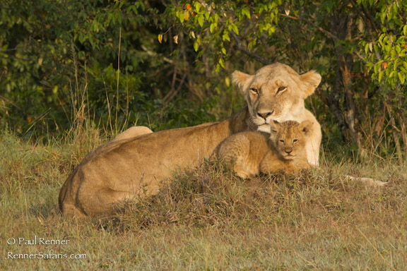 Mother and Cub Lions-7361