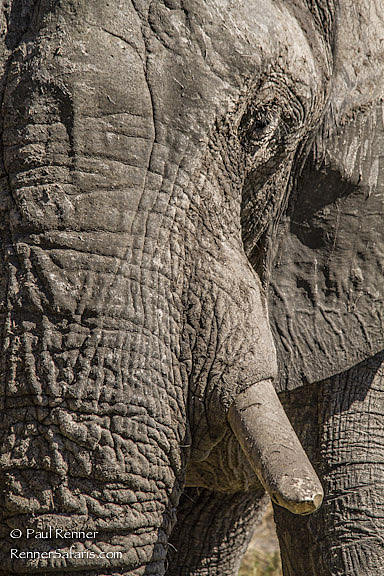 Elephant Texture-1412