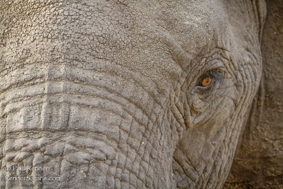Elephant Up Close-5483