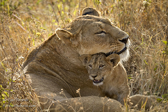 Lioness and Cub-5424