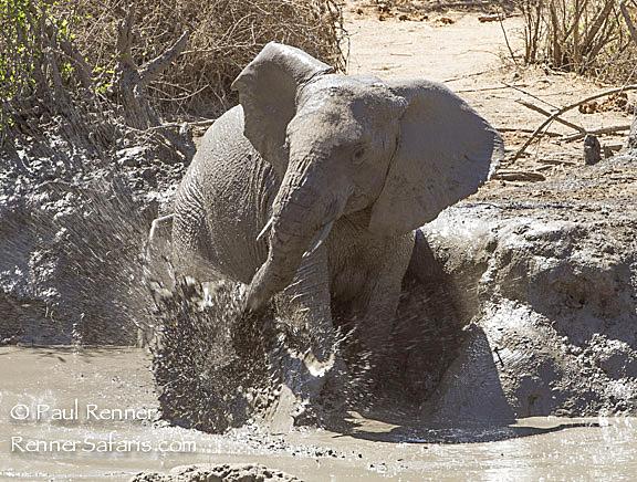 Elephant Bath -0812