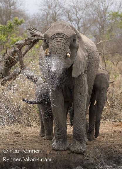 Elephant Spraying Water-2395