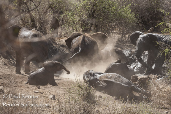 Elephants Playing at Water Hole-6841