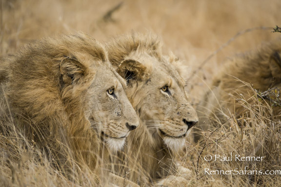 Lion Brotherhood-6381
