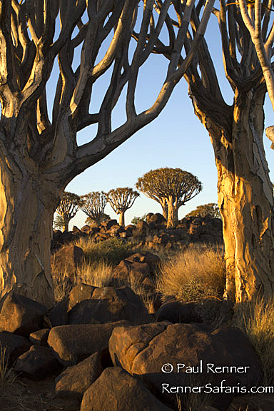Quiver Tree Forest-3223