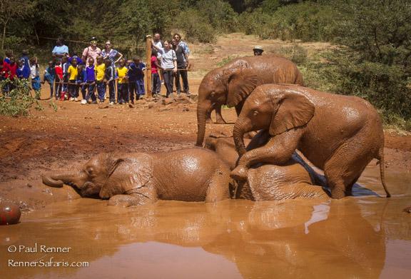 Baby Elephants Playing at David Sheldrick Orphanage-6179