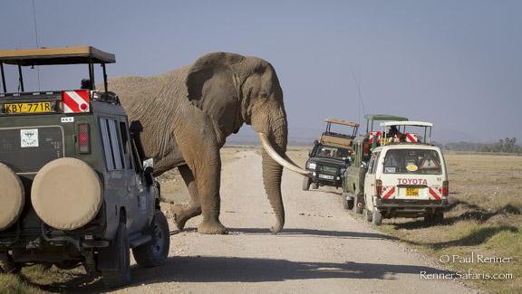 Elephants Have the Right of Way-5670