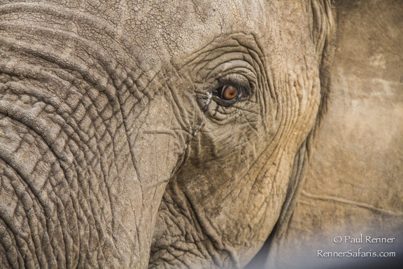 Eye of the Elephant-6524