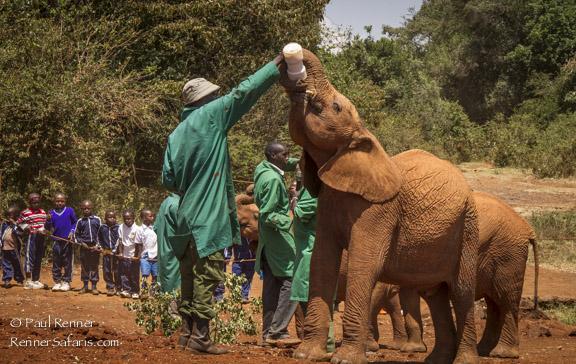 Feeding Young Elephant at David Sheldrick Orphanage-6197