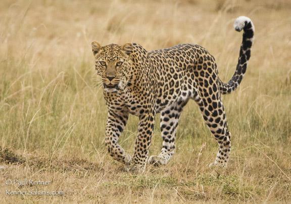 Leopard-4020