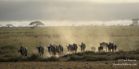 Wildebeest Backlit-3082