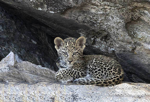 Leopard Cub at Entrance to Cave-1612